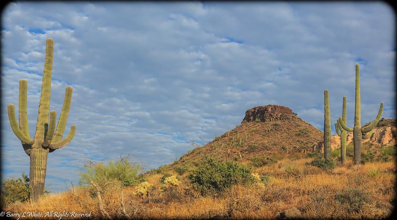 Brown's Mountain and Saguaros