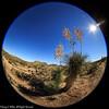 Desert Scenic Fisheye View