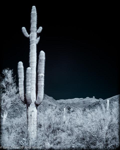 Infrared Saguaro (4581)
