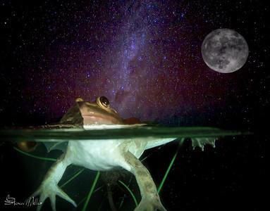 Moon frog