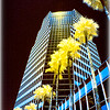 Downtown Tucson - Infrared