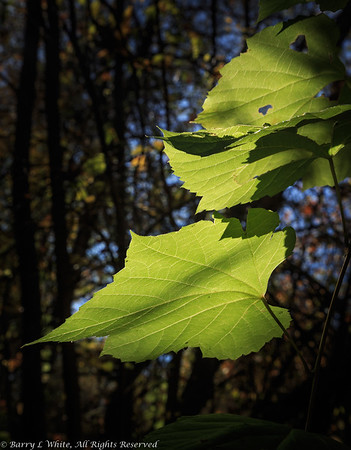 Trees-Leaves-Bushes