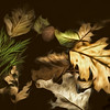 Painterly Leaves Afloat