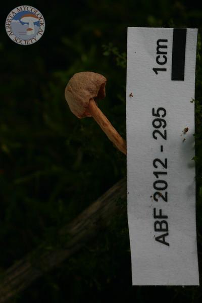 ABF-2012-295