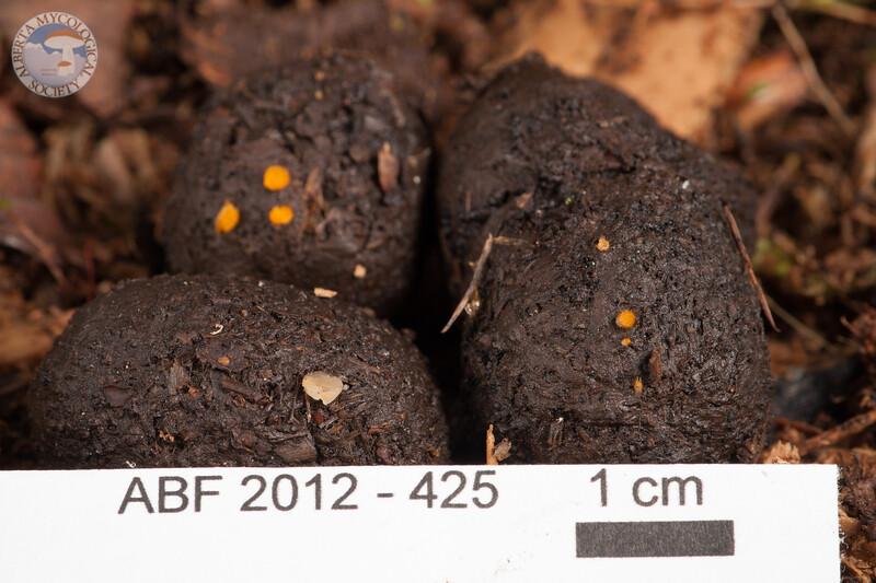 ABF-2012-425 Unidentified