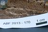 ABF-2013-170 Phellinus sp?