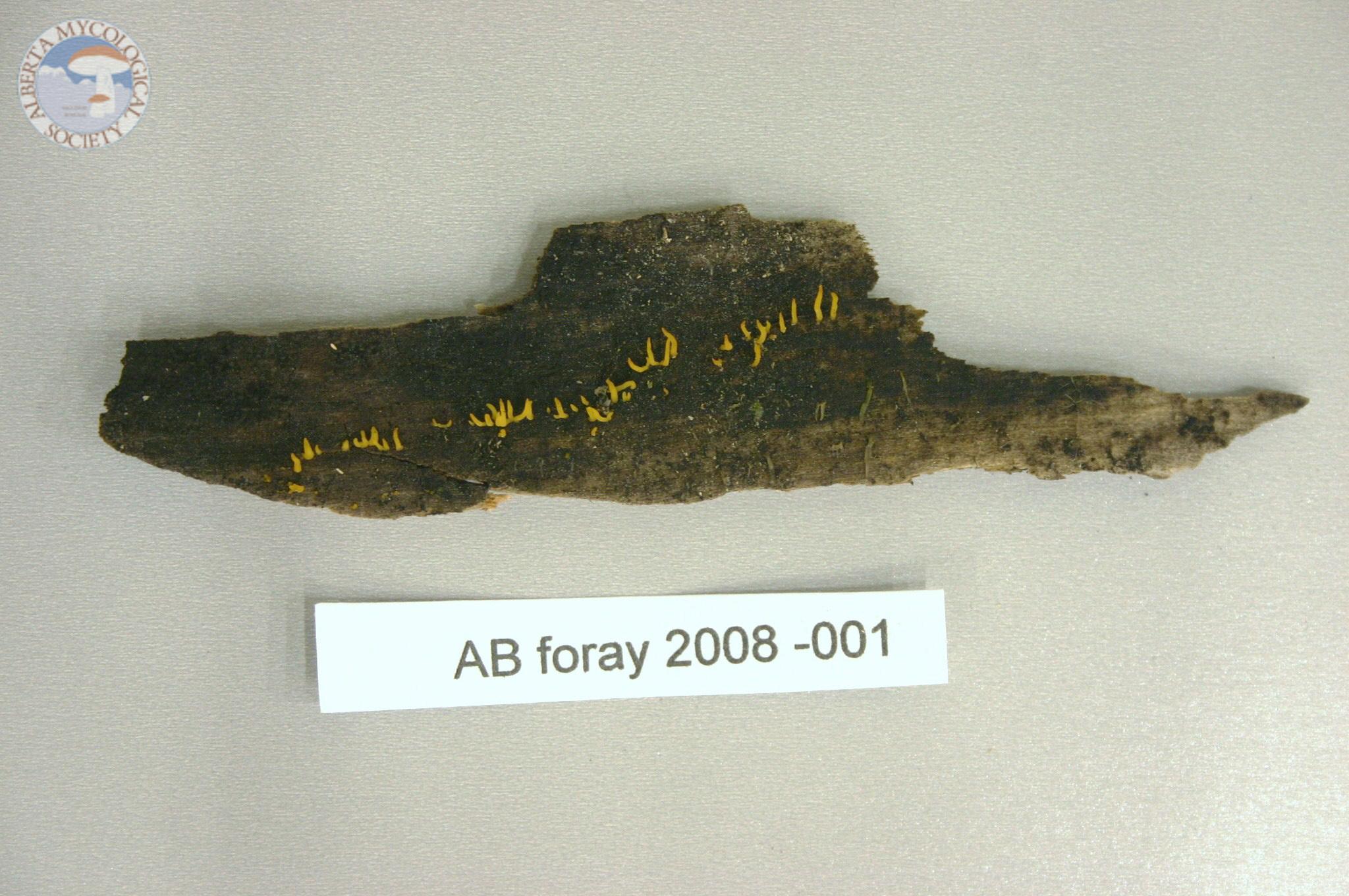 Alberta Foray 2008