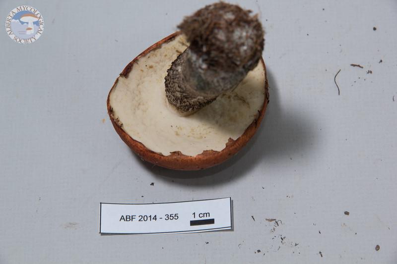 ABF-2014-355