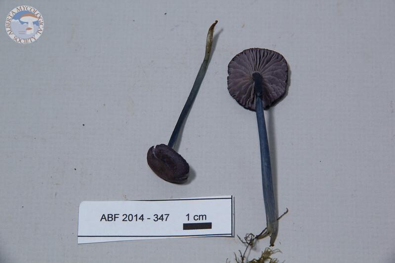 ABF-2014-347