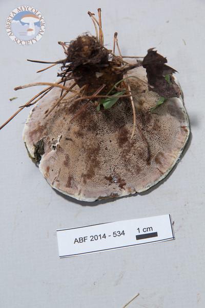 ABF-2014-534