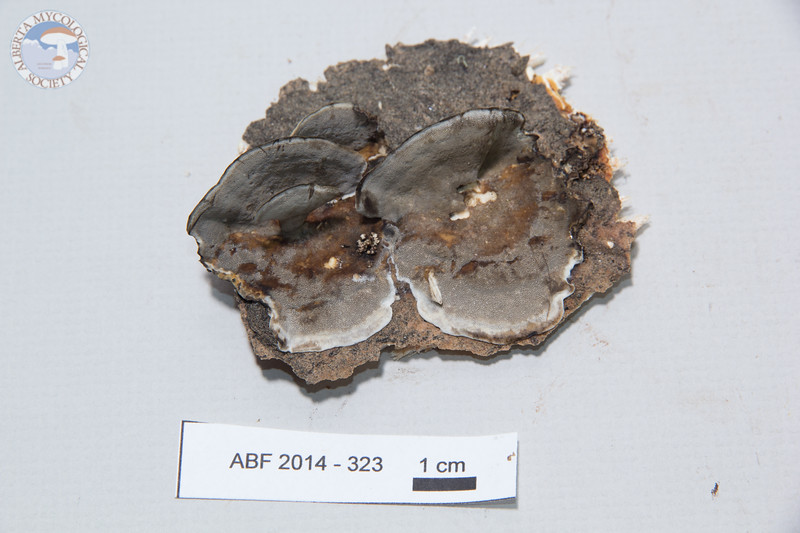 ABF-2014-323