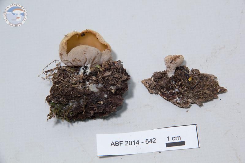 ABF-2014-542