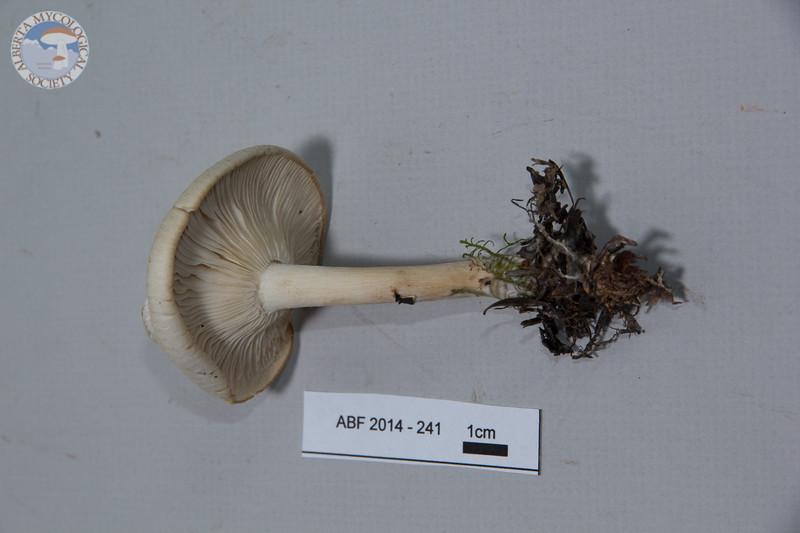 ABF-2014-241