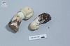 ABF-2014-002 Agaricus sylvicola