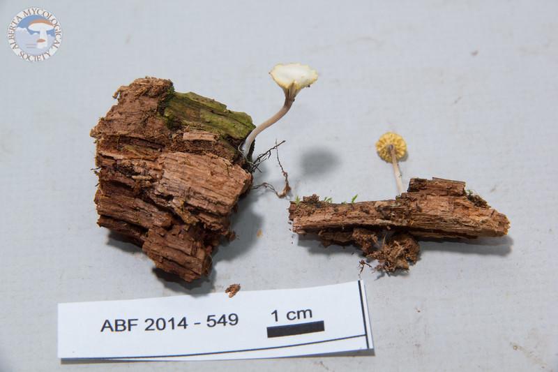 ABF-2014-549