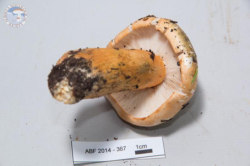 ABF-2014-367