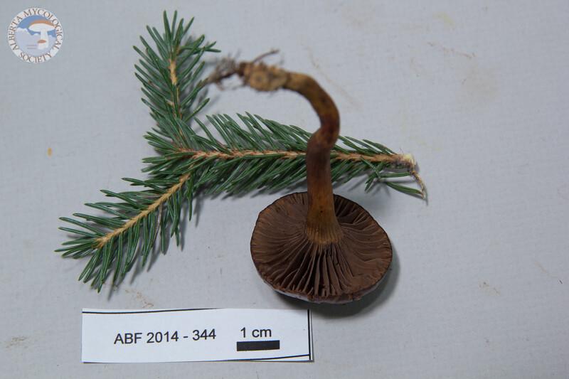 ABF-2014-344