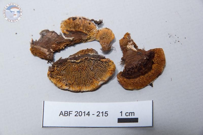 ABF-2014-215
