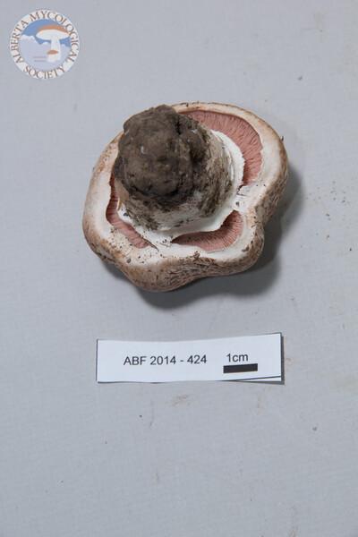 ABF-2014-342
