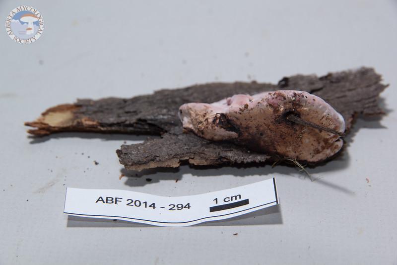 ABF-2014-294