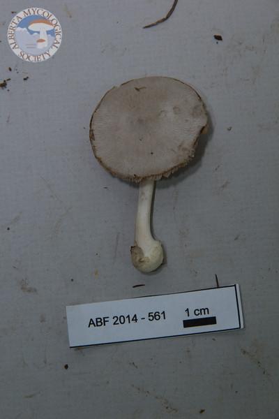 ABF-2014-561
