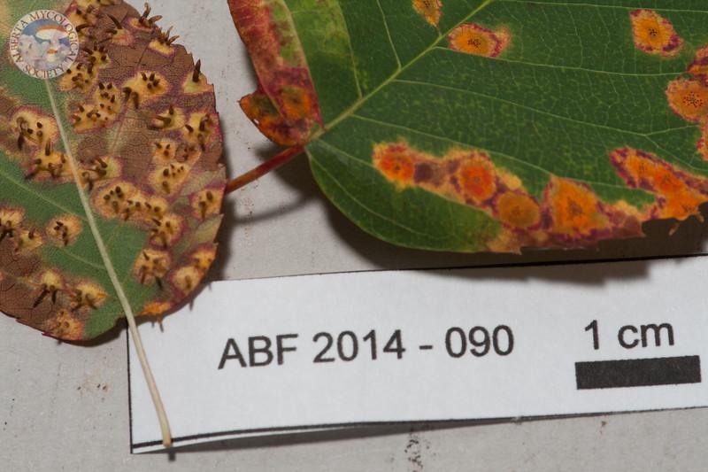 ABF-2014-