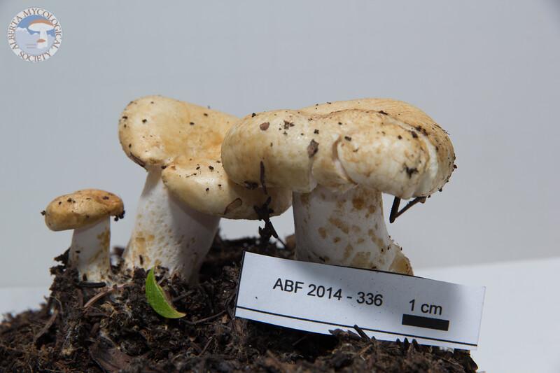 ABF-2014-336