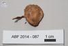 ABF-2014-087 Mycena leptocephala