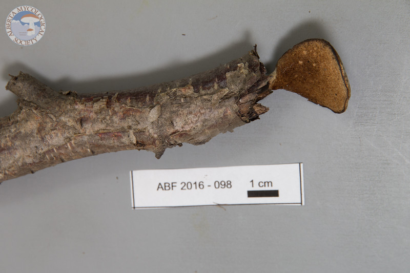 ABF-2016-