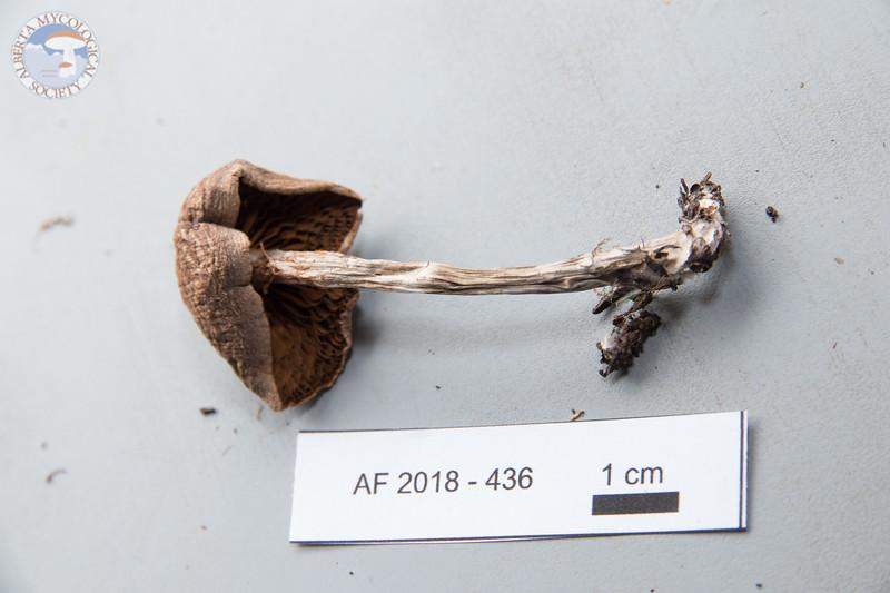 ABF-2018-436