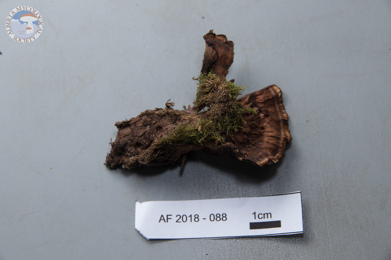 ABF-2018-088