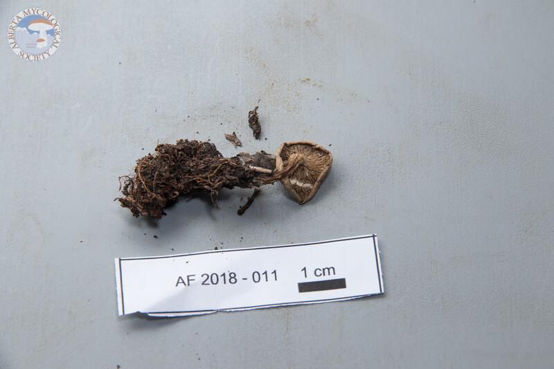 ABF-2018-011