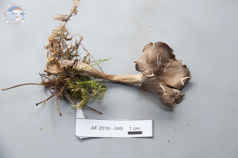 ABF-2018-049