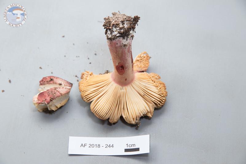 ABF-2018-244