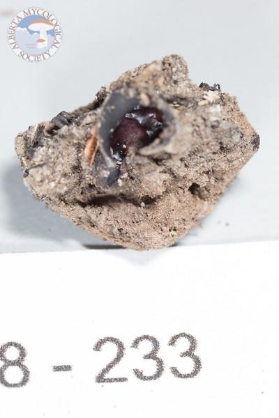 ABF-2018-233