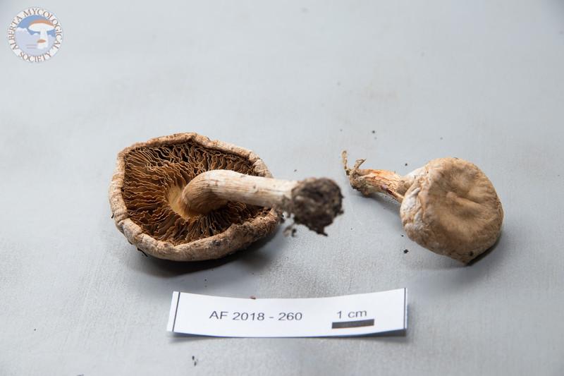 ABF-2018-260