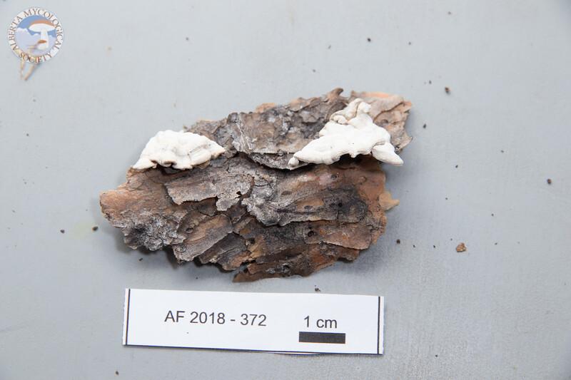 ABF-2018-372