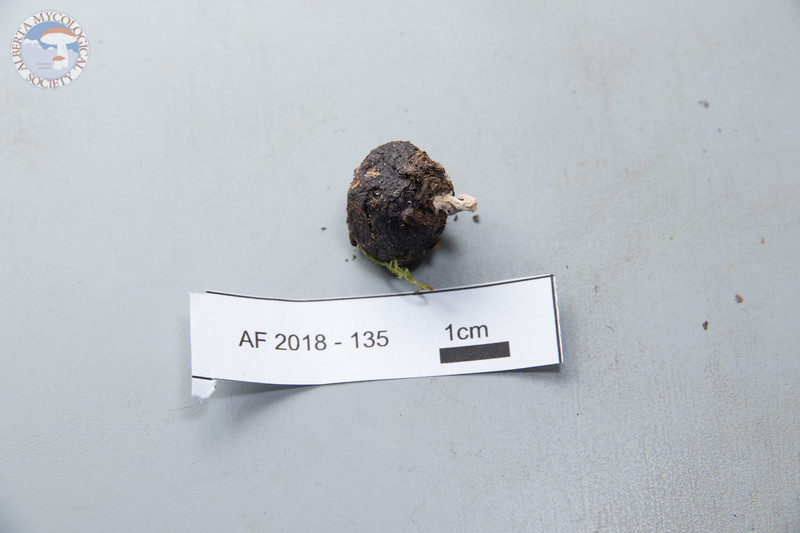 ABF-2018-135