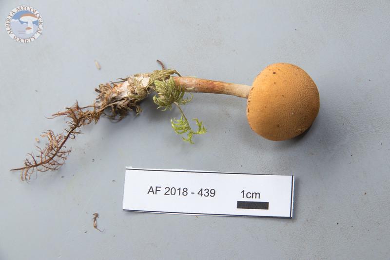 ABF-2018-439