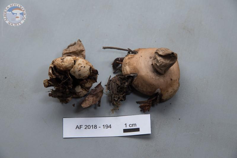 ABF-2018-194