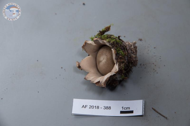 ABF-2018-388