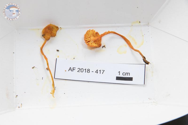ABF-2018-417