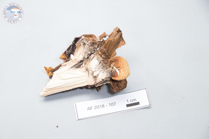 ABF-2018-107