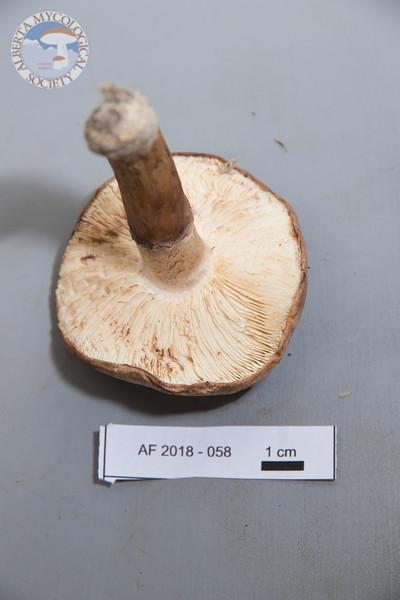 ABF-2018-058
