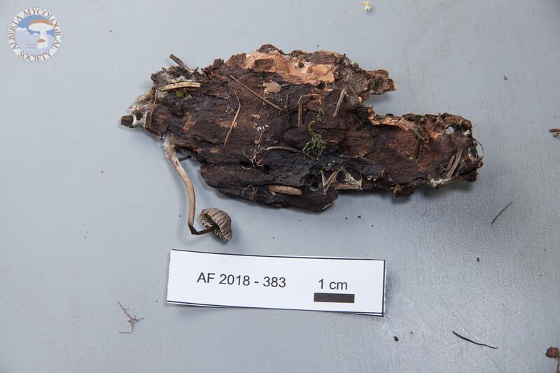 ABF-2018-383
