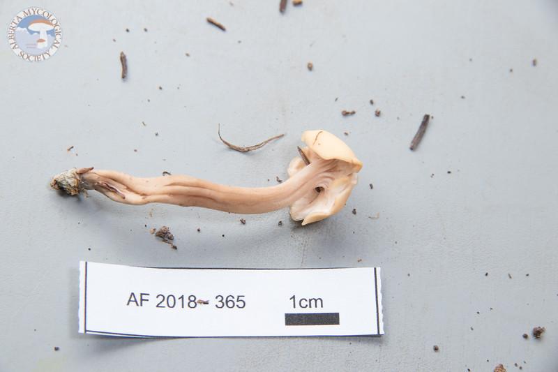 ABF-2018-365