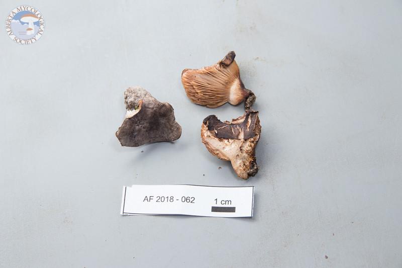 ABF-2018-062