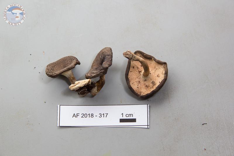 ABF-2018-317