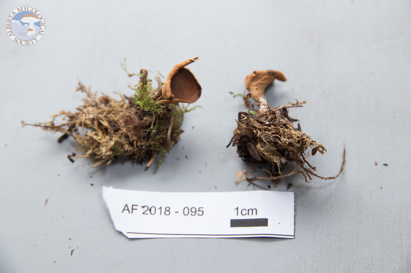 ABF-2018-095