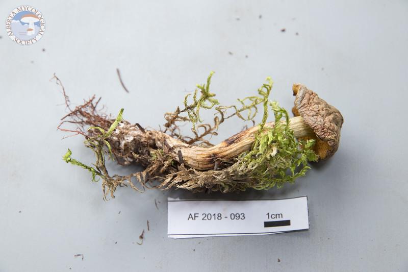 ABF-2018-093
